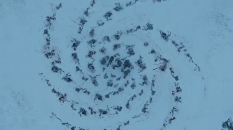 "Spiral of dead horses from Game of Thrones Season 3 Episode 3 - ""Walk of Punishment"""