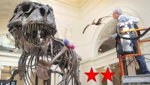Dinosaur 13 (featured image)